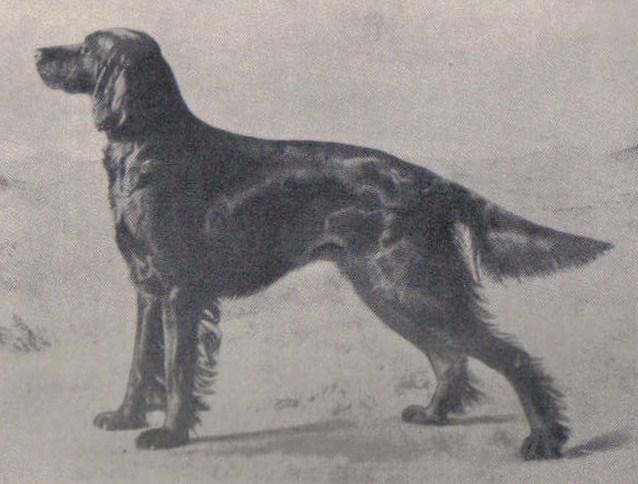 Ch Winifred b.1895