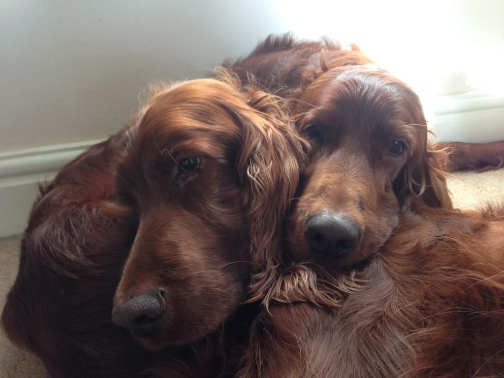 JASPER & HARVEY