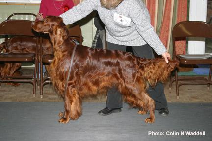 sh ch lynwood pioneer of seadog